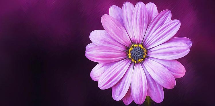 Bildbeschreibung - Hauptteil, Bilddetails, Bildaufbau, Komposition, Einfachheit, Blume lila
