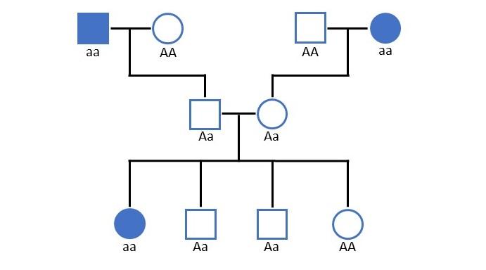 Beispiel für einen Stammbaum