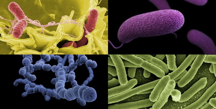 Beispielbilder für Prokaryoten
