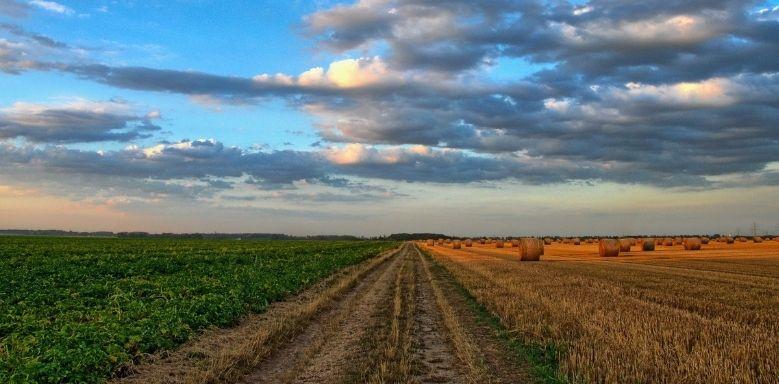 Ökologische Landwirtschaft - Feld