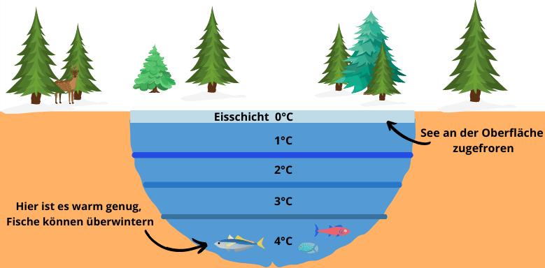 Abiotische Faktoren Wasser