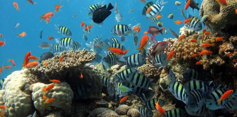 verschiedene Fischarten in einem Korallenriff als Schaubild für sympatrische Artbildung
