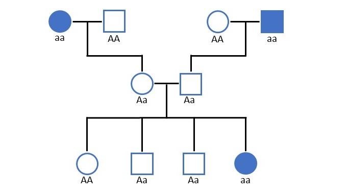 autosomal rezessiver Erbgang in einer Stammbaumanalyse