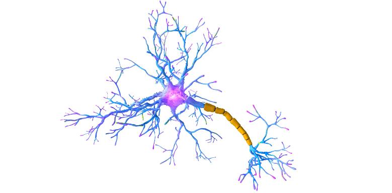 Synapsen einer Nervenzelle