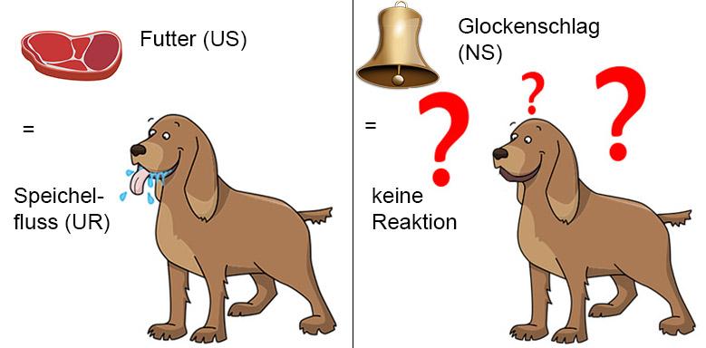 Pawlowscher Hund vor Experiment