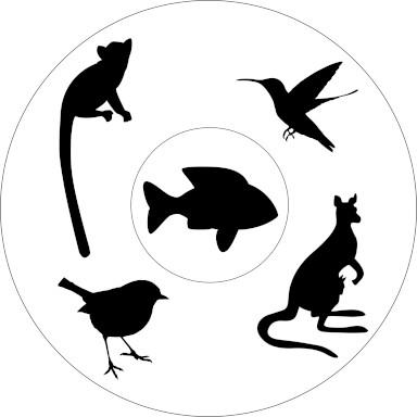 Fünf Beispiele für adaptive Radiation. Lemuren, Kleidervögel, Beuteltiere, Darwinfinken, Buntbarsche