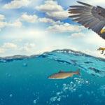 Weißkopfseeadler jagt Fisch