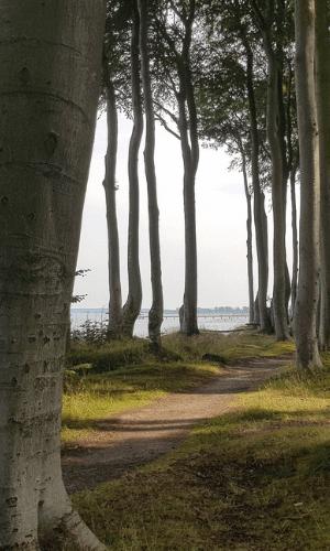 Romantik Epoche Natur Wald