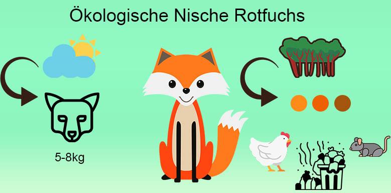Ökologische Nische Rotfuchs