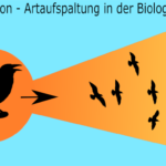 Adaptive Radiation, Artaufspaltung