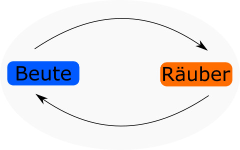 Die Wechselwirkung zwischen Räuber und Beute entflatet sich in einem, sich wiederholenden Kreislauf