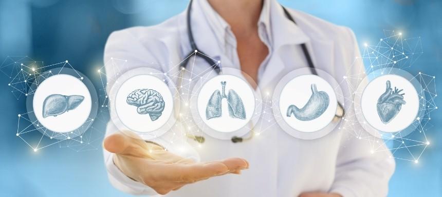 5 wichtige Organe: Leber, Gehirn, Lunge, Magen, Herz