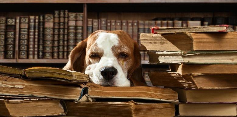 Hund und Literatur