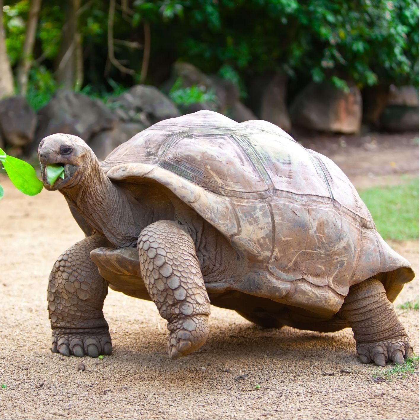 Schildkröte Steckbrief