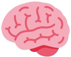Bei einer Rechenstörung sind die Bereiche im Gehirn für Zahlen und Mengen nicht ausreichend vernetzt