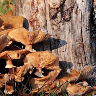 Pilze gehen mit Pflanzen Symbiosen zum Stoffwechsel ein