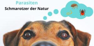 Parasiten sind die Schmarotzer der Natur. Hund denkt an häufige Parasiten: Floh, Zecke, Wurm