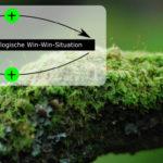 Symbiose als Nutzgemeinschaft