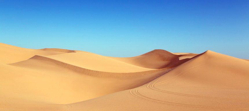 Biotop Wüste