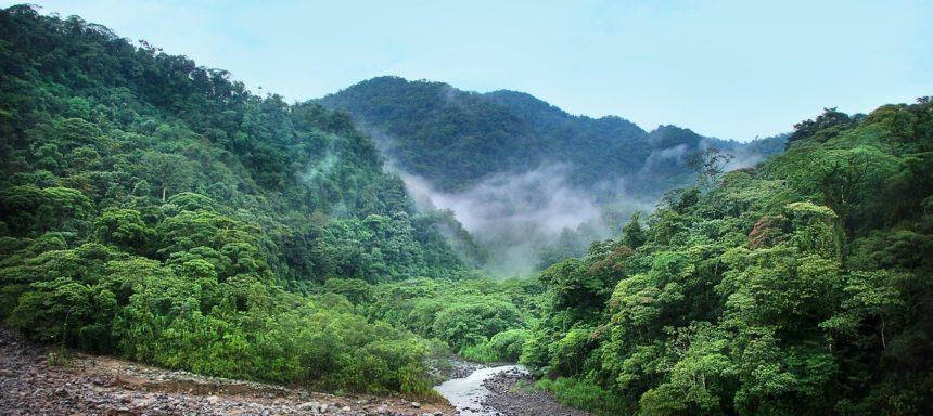 Biom tropischer Regenwald
