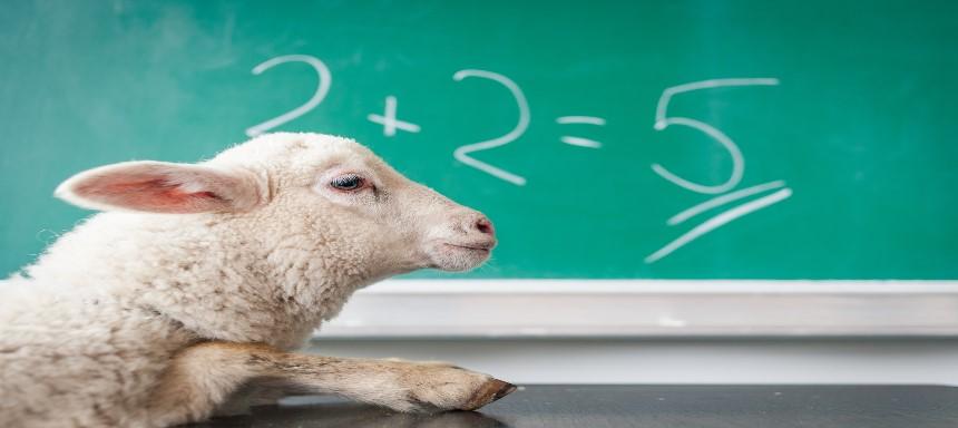 Schaf vor Tafel