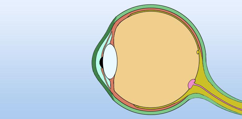 Skizze des Auges