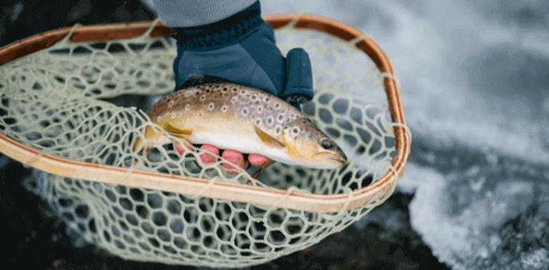 Berufe mit Tieren Fisch