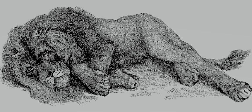 Fabeln - Löwe