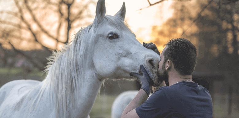 Berufe mit Tieren Pferdewirt
